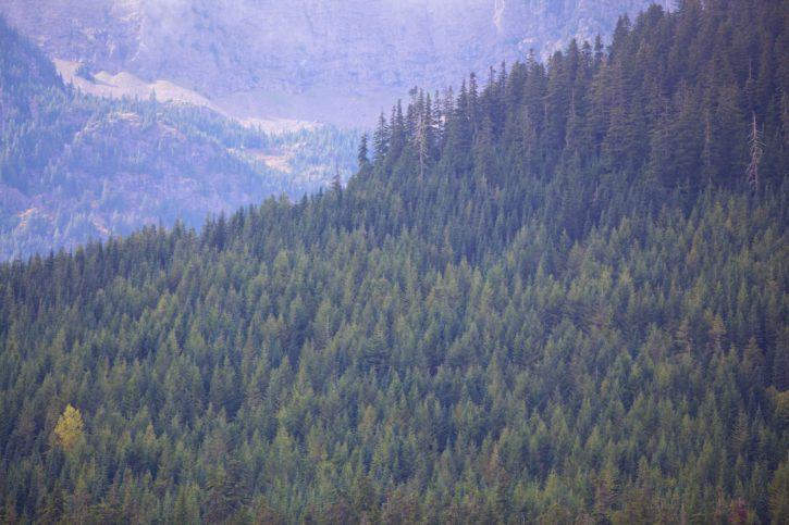 forest, hillside