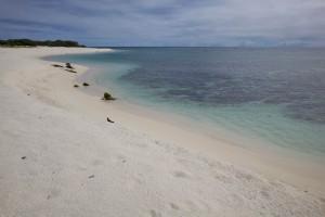 Laysan, plaża i wybrzeże