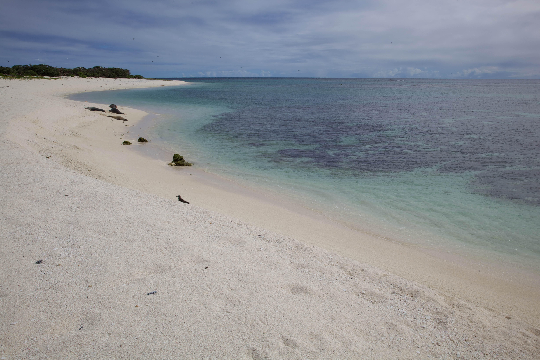 Free photograph; laysan, beach, coast