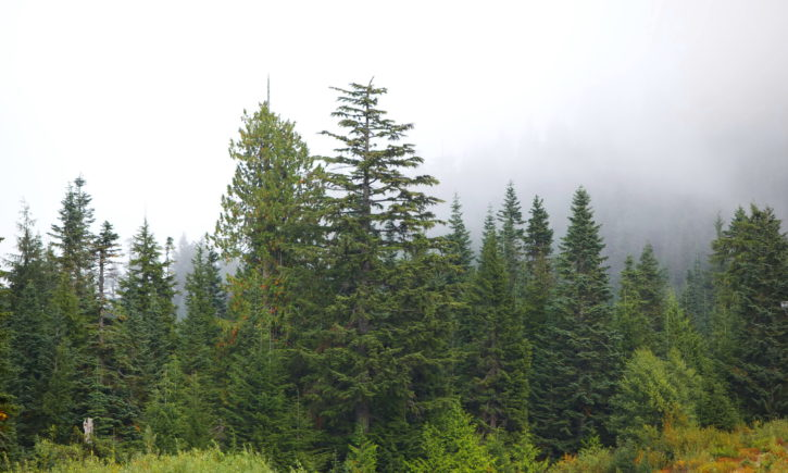 mountain, views, evergreen, forested, hillsides