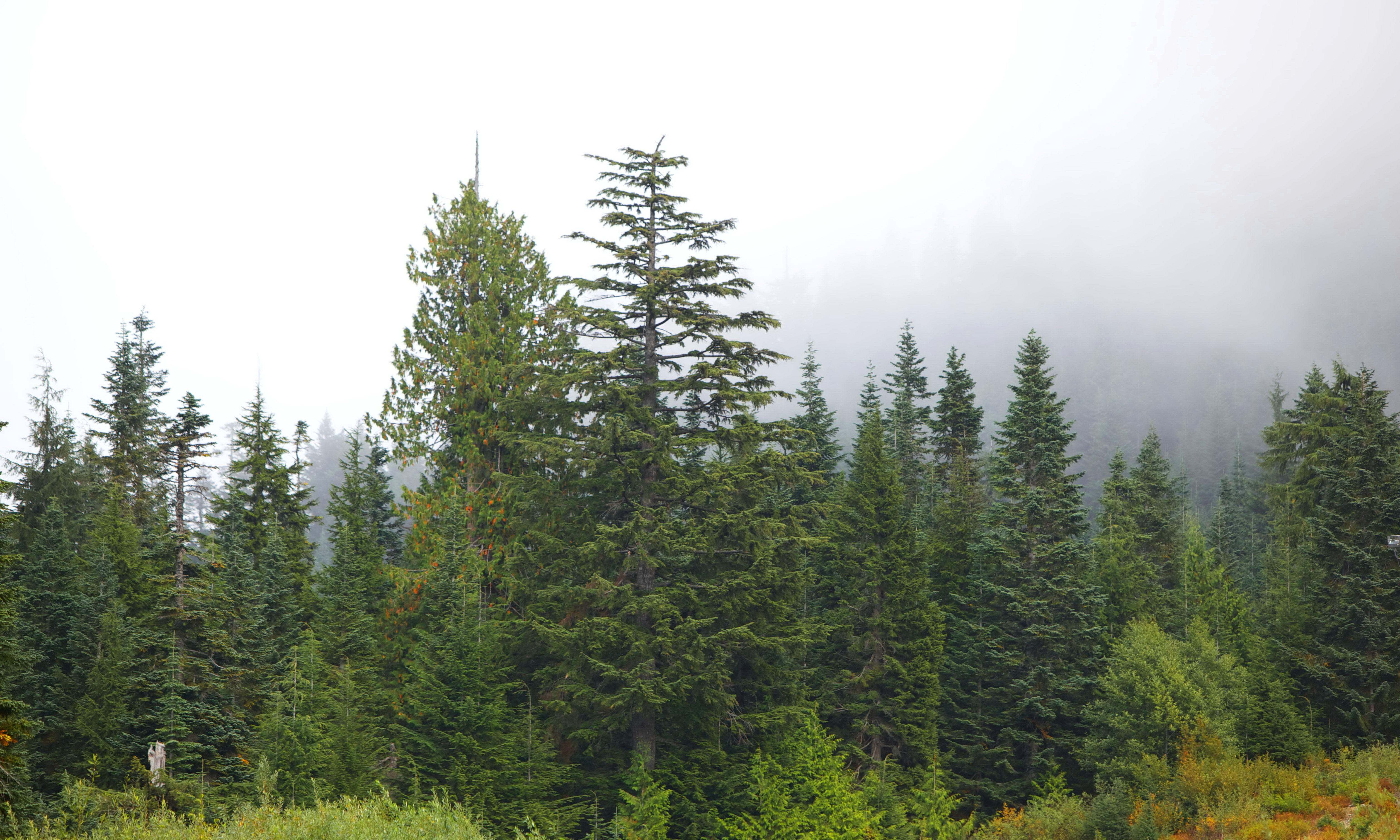 Free photograph; mountain, views, evergreen, forested, hillsides