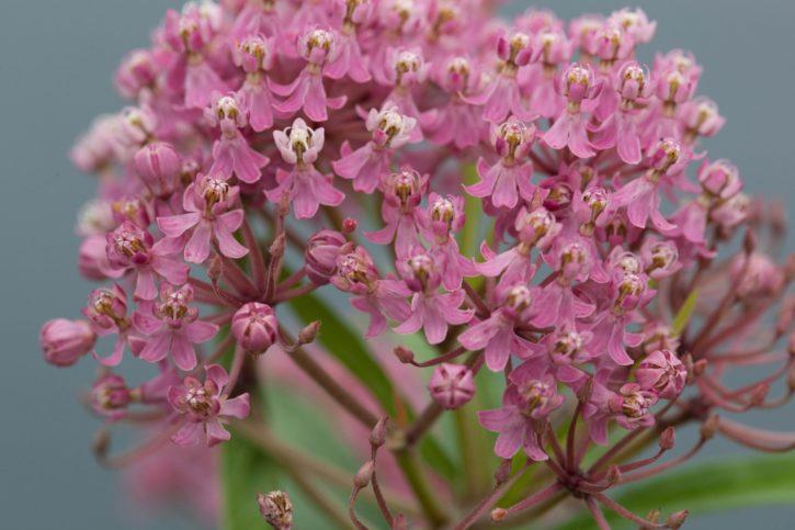 pinkish, wildlife, flower, wildness, bloom, spring, nature