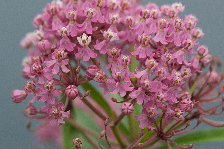 Free photograph; pinkish, wildlife, flower, wildness, bloom, spring, nature
