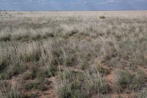 malebné, pouštní prérii, příroda,
