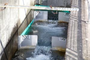 mriještenje, kanal