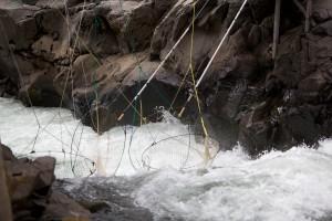tradizionale, tuffo, al netto, pesca