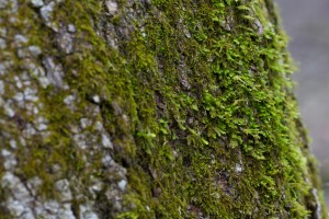 arbre, tronc, mousse
