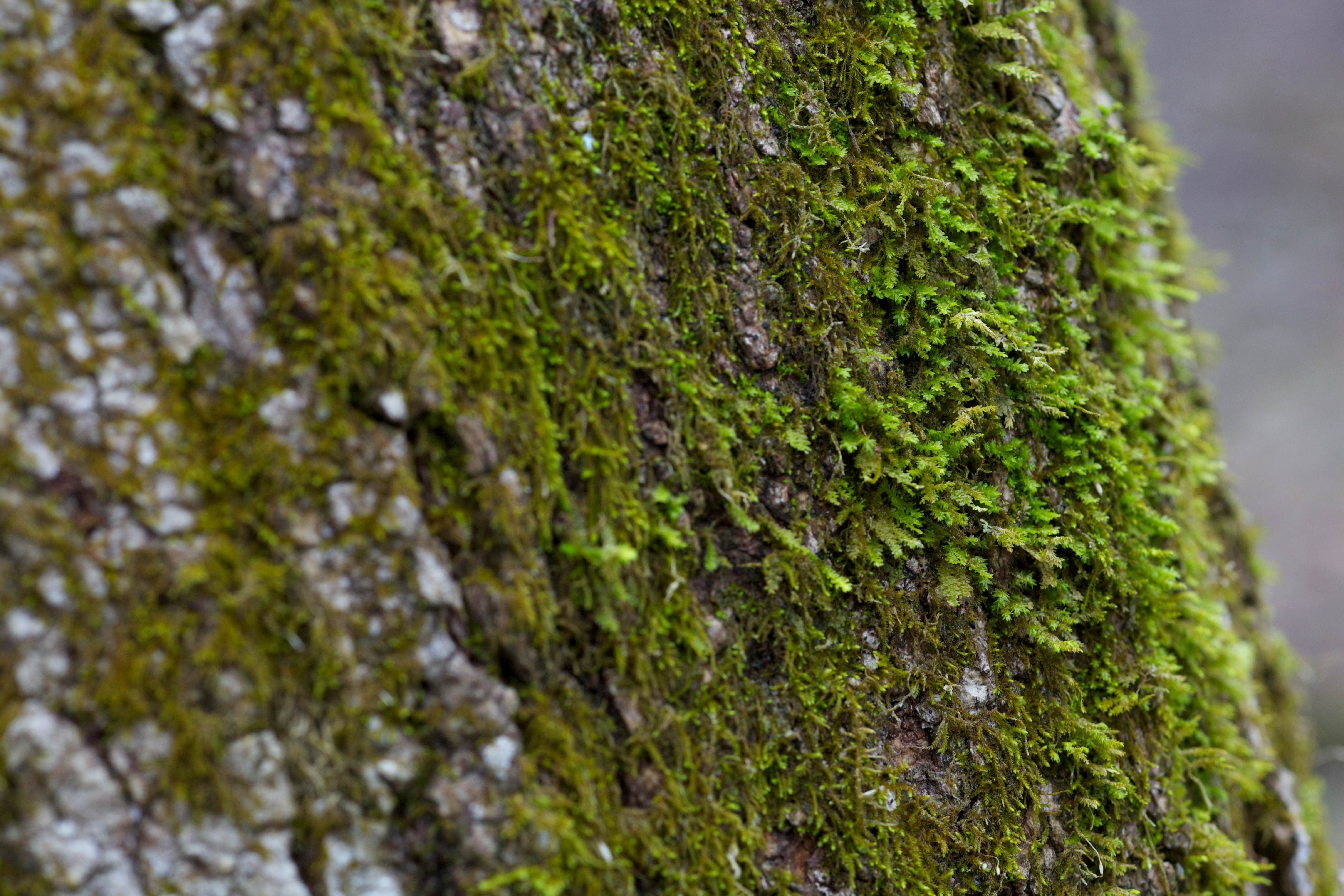 Free photograph; tree, trunk, moss