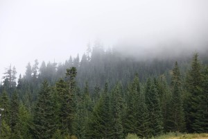 western, evergreen, forests