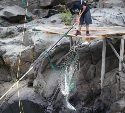 yakama, tribal, member, traditional, net, fishing