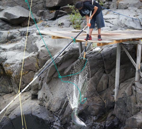 Yakama, tribal, membro, tradicional, líquido, pesca