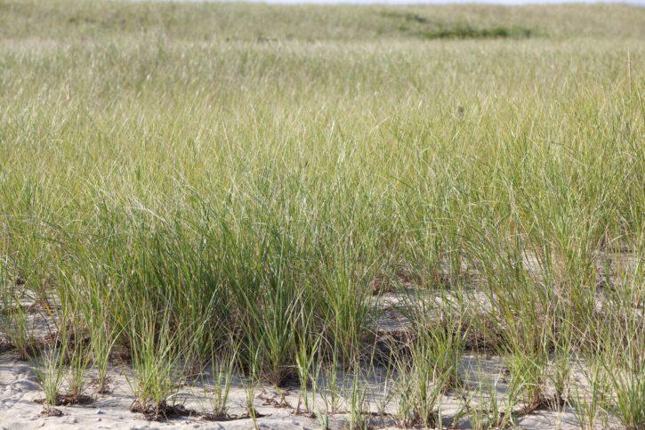 beach, grass