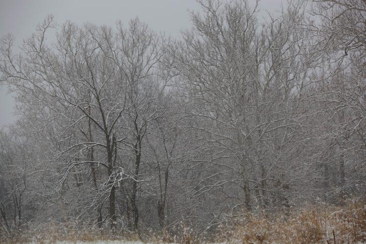 dusting, falling, snow, tree