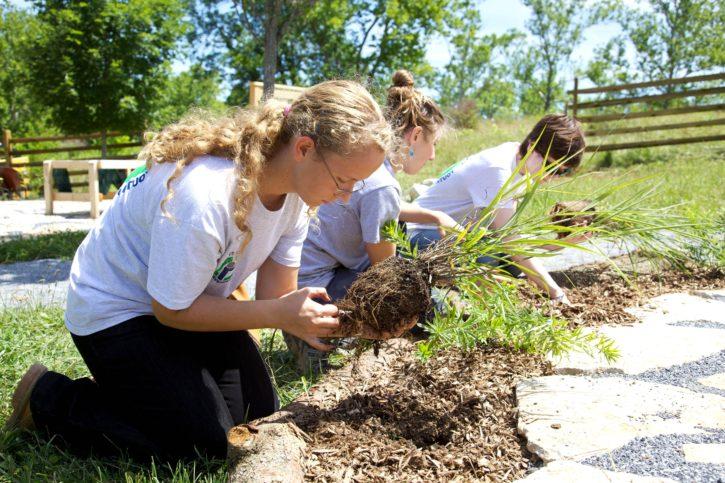 hagearbeid, utendørs, natur, ungdom, klasserom
