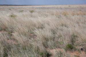 paysage, herbe courte, prairie, sec, herbe, désert, scénique