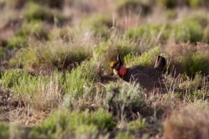 Muž, menší prérie pták, pouště, zvíře