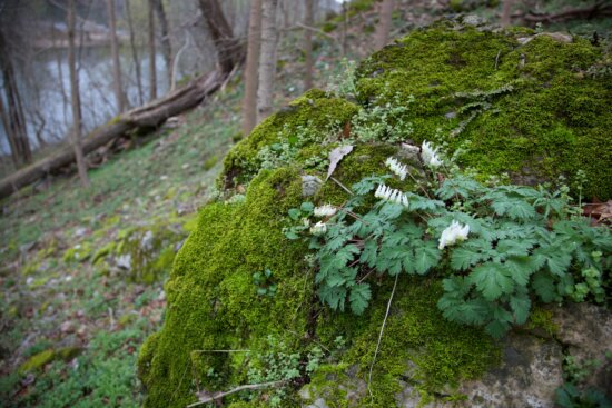 spring, woods, forest, nature, plants
