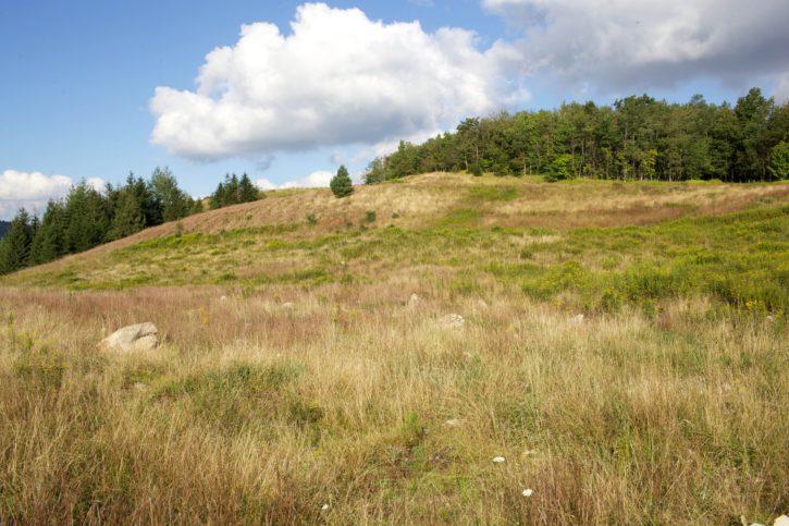 spruce, scenic, hills, summer