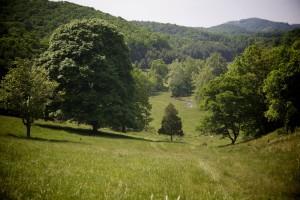 потік, пагорби, Пасовище, поля, дерева