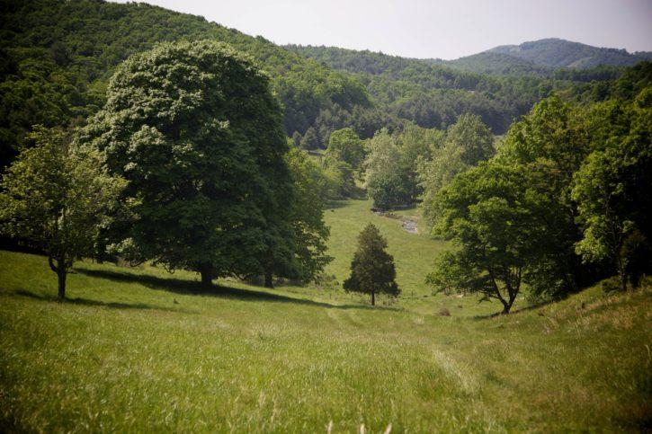 strumień, wzgórza, pastwiska, pola, drzewa