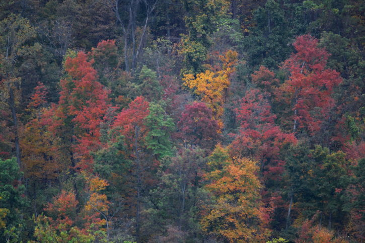 drveće, prikaz, jesen, boje