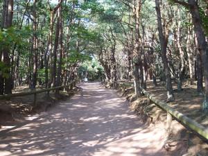 chemin, forêt
