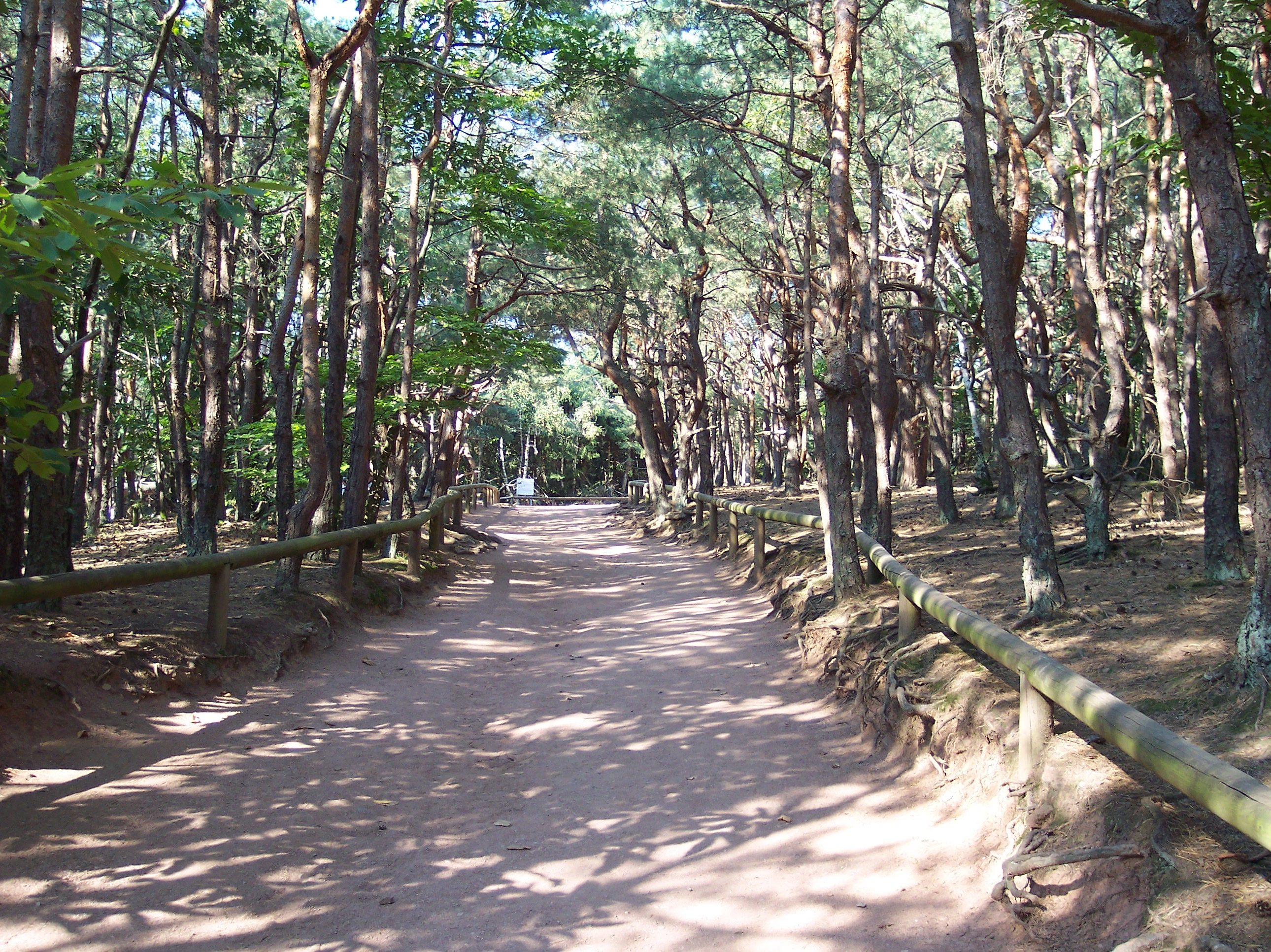 Free photograph; path, forest