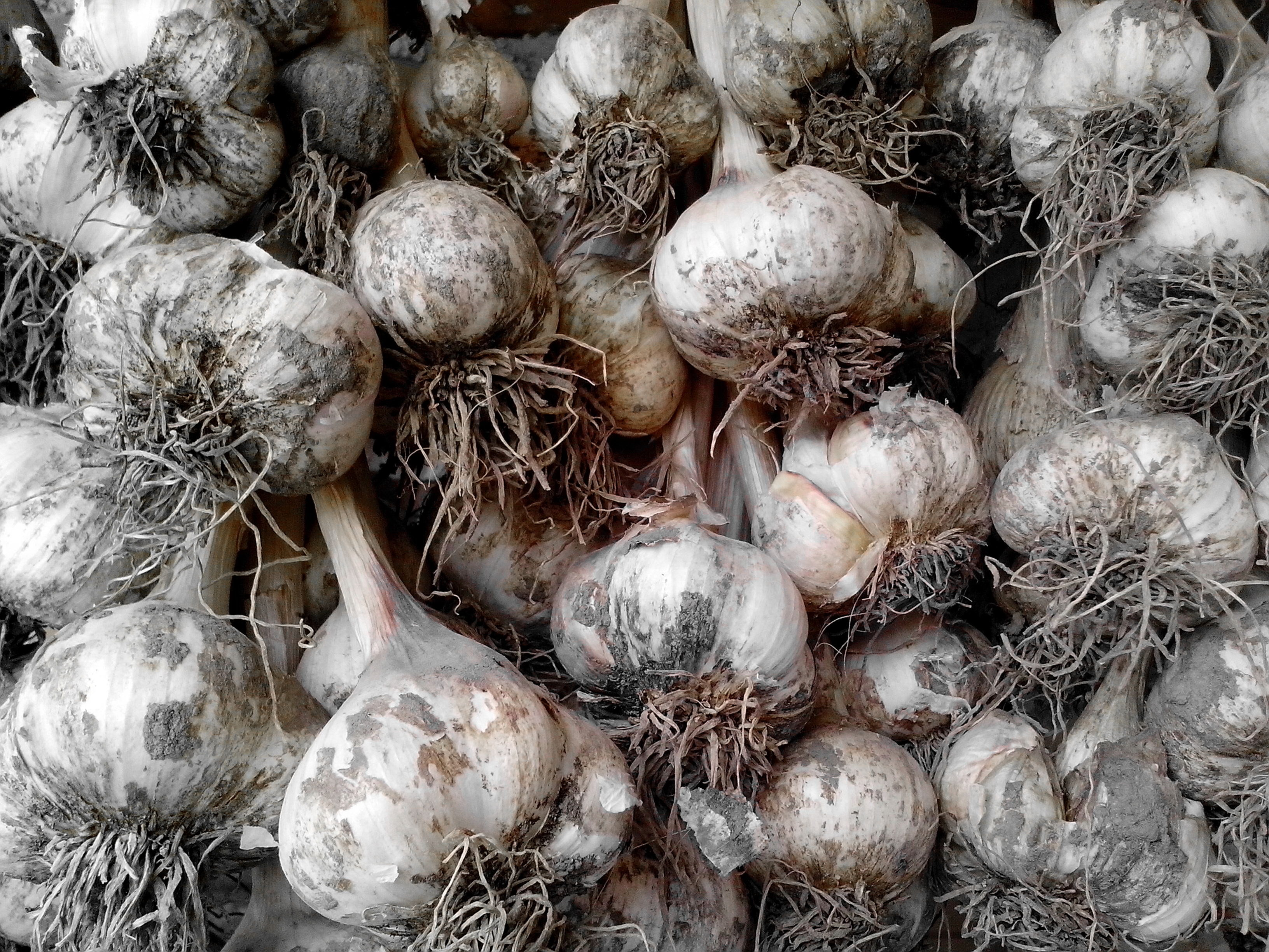 Free photograph; garlic, vegetables, food
