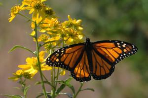 오렌지, 색깔, 곤충, 바둑, 나비