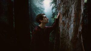 homme, seul, garçon, enfant, sombre, la lumière du jour, brouillard, forêt