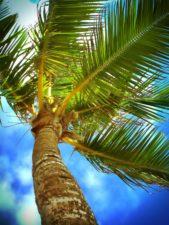 strand, Caribisch gebied, wolken, kust, kokos, buitenshuis, palm, tropische, strand