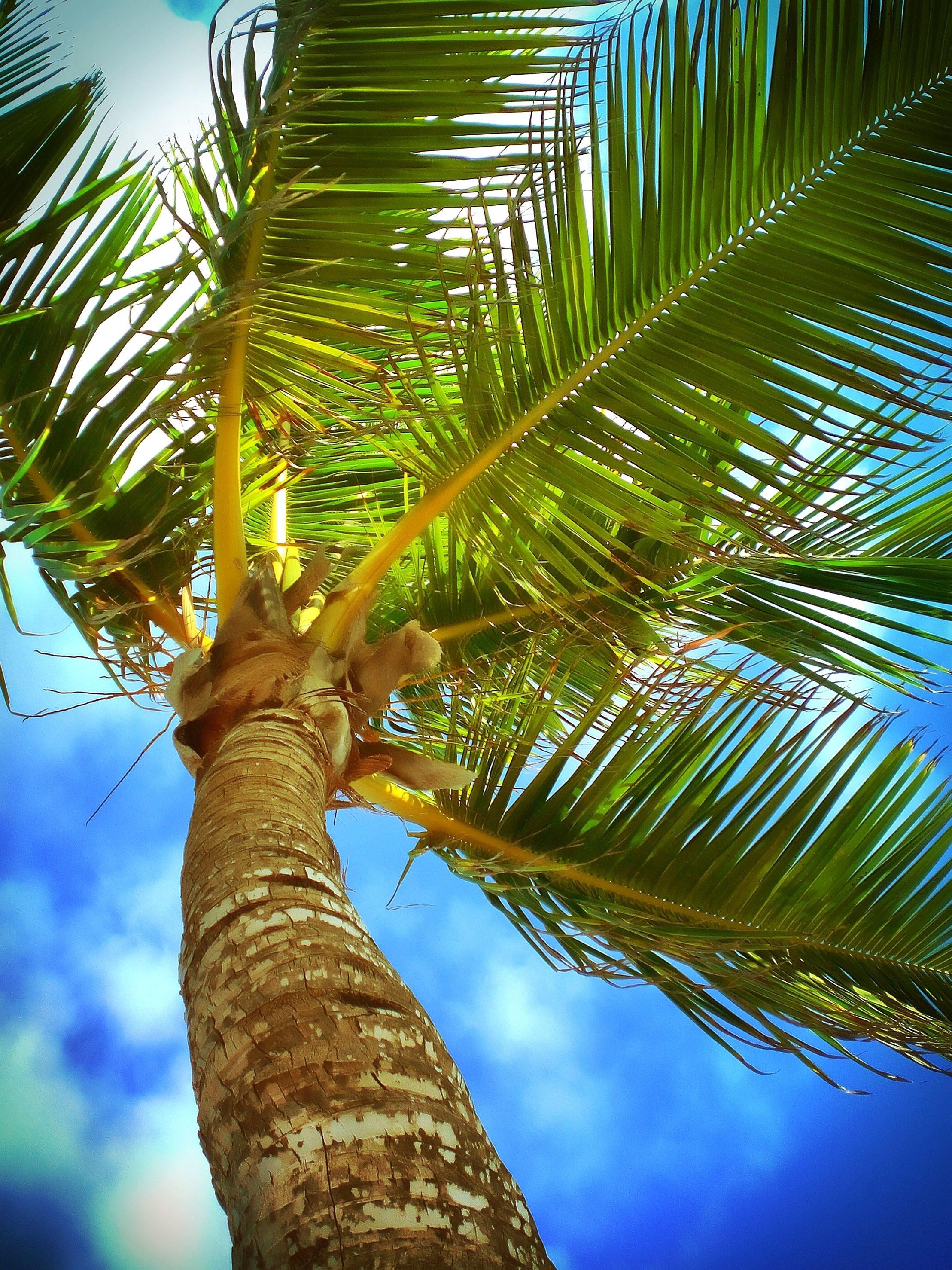 imagen gratis  playa  del caribe  nubes  costa  coco  al