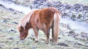 cheval, agriculture, animaux, poney, prairie
