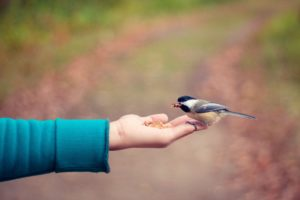 bird, animal, hand, eating, gray, white