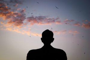 새벽, 황혼, 실루엣, 새, 하늘