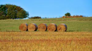 pszenicy, rolnictwa, bale, gospodarstwa, pola, żniwa, słomy