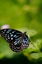 biologia, Motyl, środowiska, flora, kwiat, fokus, ogród, owad