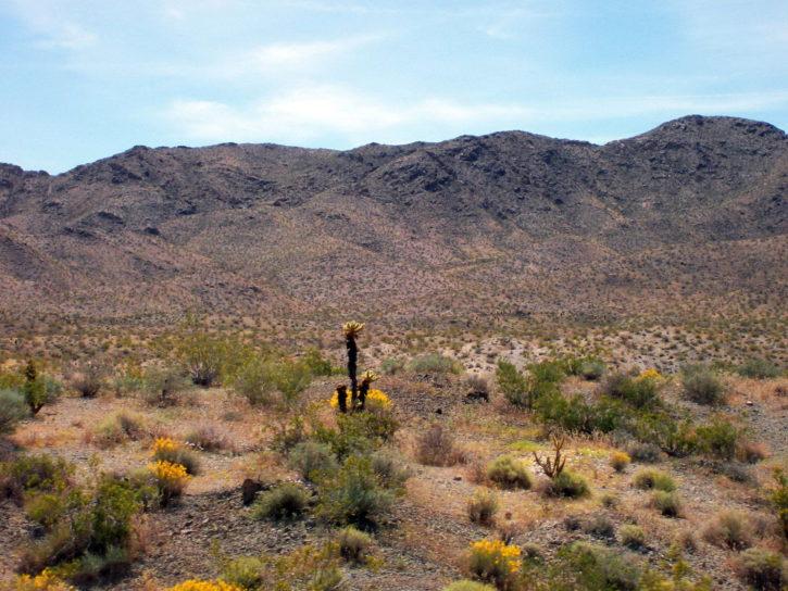 woestijn, heuvels, gras, westelijke Verenigde Staten, natuur