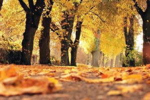 alley, colours, park, wood, yellow, forest, leaves