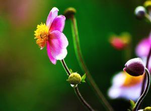 alam, kelopak bunga, tanaman, flora, bunga, kuncup, mekar