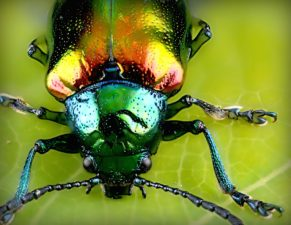insect, green leaf, beetle, macro, close-up