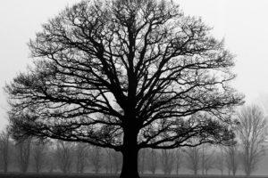 automne, branche, froid, brouillard, forêt, herbe, le temps, le bois