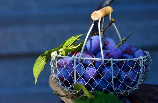 plums, basket, healthy food, juicy fruit, food, fruits