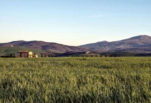 blue sky, agriculture, crops, grass, grassland, farm