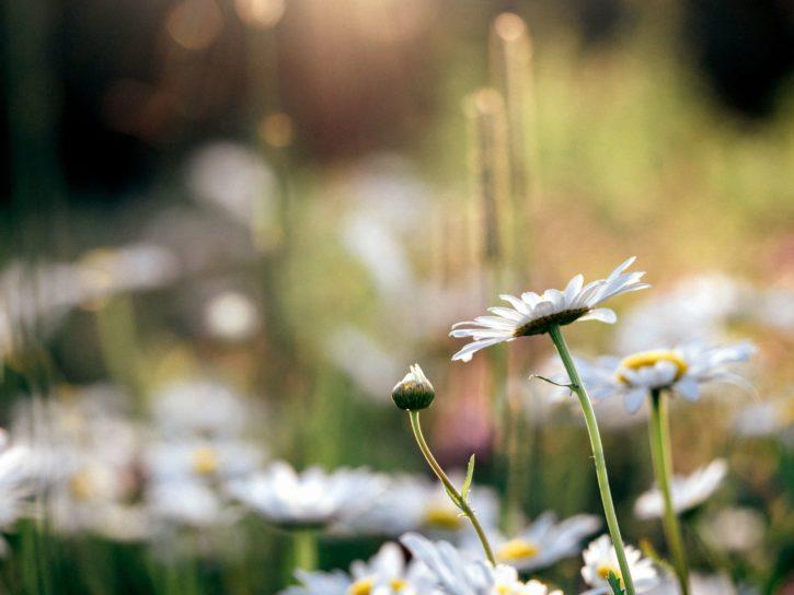 blossom, depth, bloom, field, flora, flower
