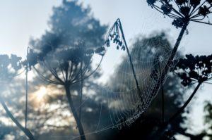 Spinnennetz, Morgendämmerung, Tau, Nebel, schön, Pflanze, Silhouette,
