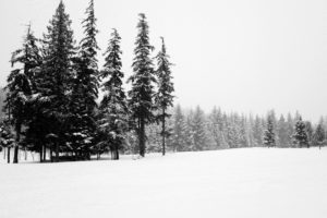 snow, trees, weather, winter, frosty, frozen, ice, landscape, nature