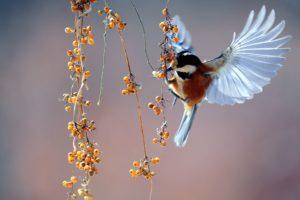птица летит, макро, природы, животных
