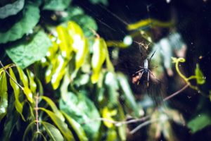 spindelvev, blader, spider, edderkoppnett