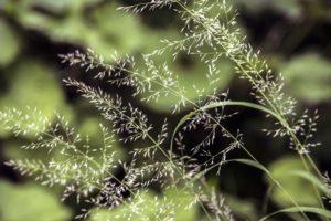 environment, field, focus, grass, growth, macro, nature